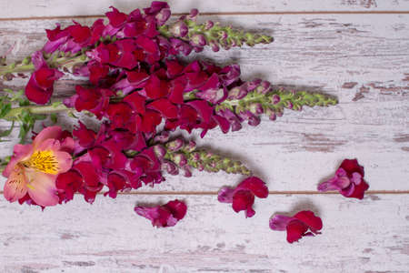 snapdragon: Snapdragon flowers bouquet arranged on wooden background with space for text Stock Photo
