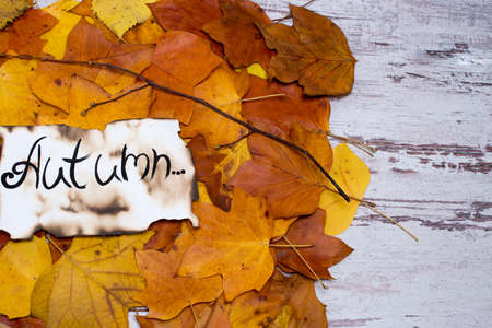 Colorful and bright background of fallen autumn leaves. the inscription is the autumn on parchment. Autumn concept. with space for text