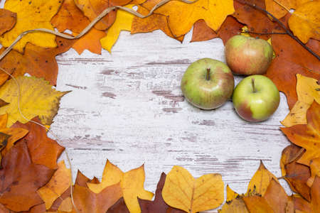 Colorful and bright autumnal background, autumn leaves, on a shabby white wooden background with three green and red apples. Autumn concept.