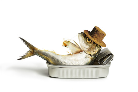 sardine can: Sardine chilling out in the can