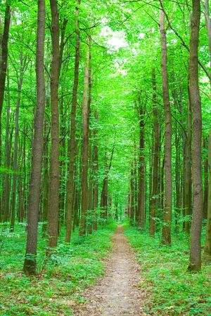 green nature. forest in summer Stock Photo - 3657453