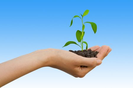 seedling: Plant in a hand over sky with clouds Stock Photo