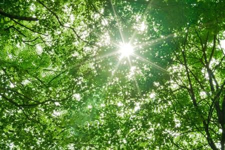 backlit: zonlicht in de bomen van groene zomer forest Stockfoto