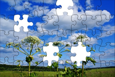 Summer rural puzzle landscape with Heracleum sosnowsky Stock Photo