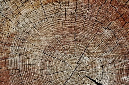 Rough textured wooden cut with tree rings and cracks Stock Photo