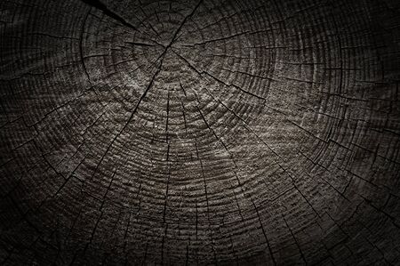 Rough textured wooden cut with tree rings and cracks photo