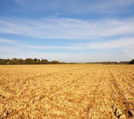 tillage: Farming field tillage near forest at sunny autumn day