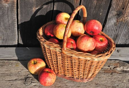 Ripe red yellow apples in the basket, weathered textured wooden background photo