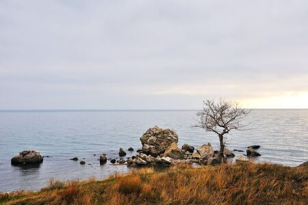 Alone tree and grass at rocky coastline, winter sea view Stock Photo - 13764867