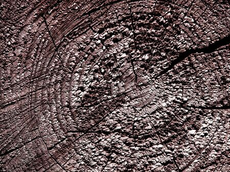 Rough wooden cut texture with tree rings photo