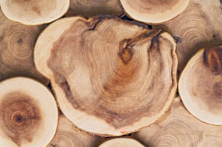 Wooden cut texture with tree rings grain photo