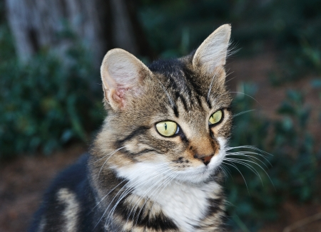 Young cute tabby beautiful cat photo