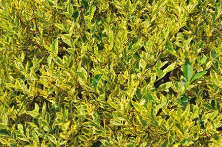 Lush green yellow leaves foliage closeup nature background Stock Photo - 17017150