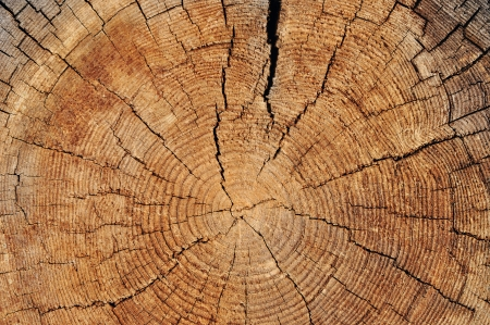 Rough wooden cut texture with tree rings and cracks photo
