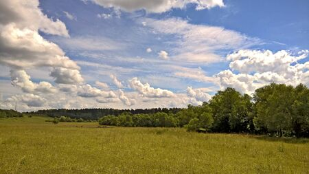 Rural nature landscape with caws, beautiful grass and trees