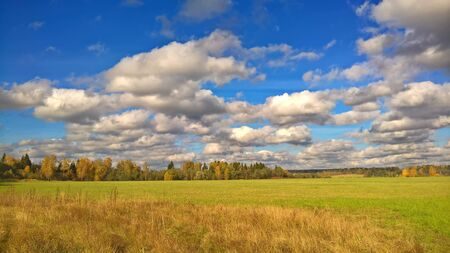 Rural landscape with beautiful trees and gras