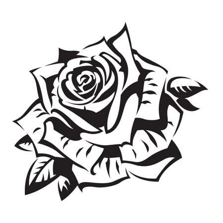 rose garden: rose