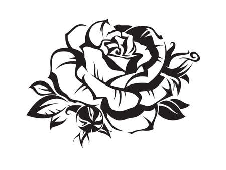 isolated on white: rose