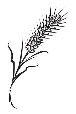 rice plant: wheat Illustration
