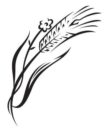 wheat grass: wheat Illustration