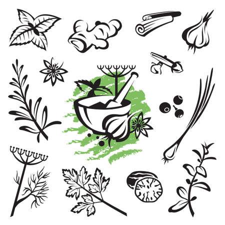 coriandrum sativum: conjunto de diferentes hierbas y especias