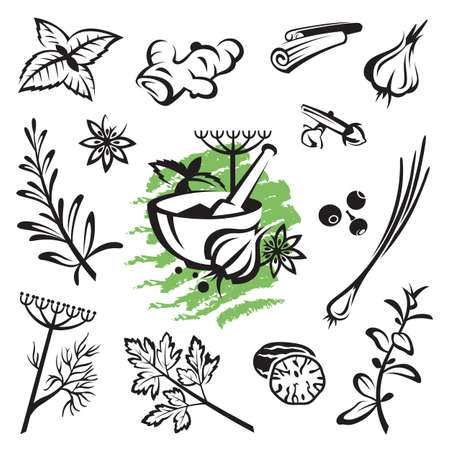cilantro: set of different herbs and spices Illustration