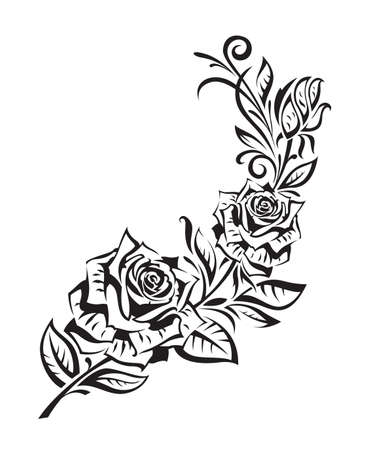 garden design: cespuglio di rose nero su sfondo bianco