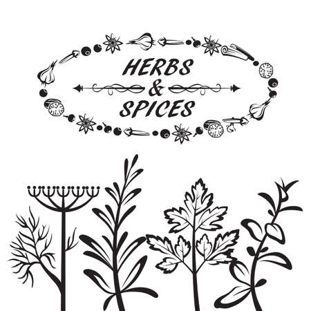 coriander: set of different herbs and spices Illustration