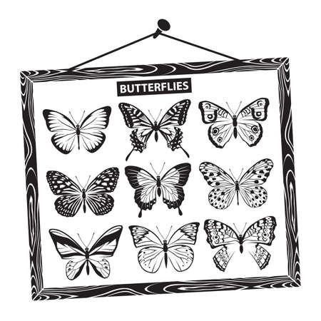 monochrome set of butterflies in a wooden frame Vector