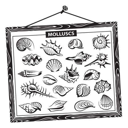 monochrome seashells set in a wooden frame Vector