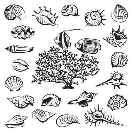 モノクロ貝殻サンゴと魚と設定します。