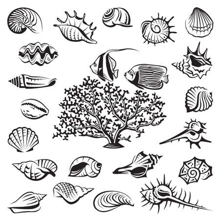 cockleshells: monochrome seashells set with coral and fish Illustration