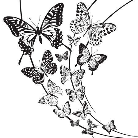 fly: dise�o de mariposas en blanco y negro sobre fondo floral Vectores