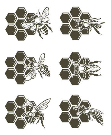 honeybee: set of design with bee and of honeycomb Illustration