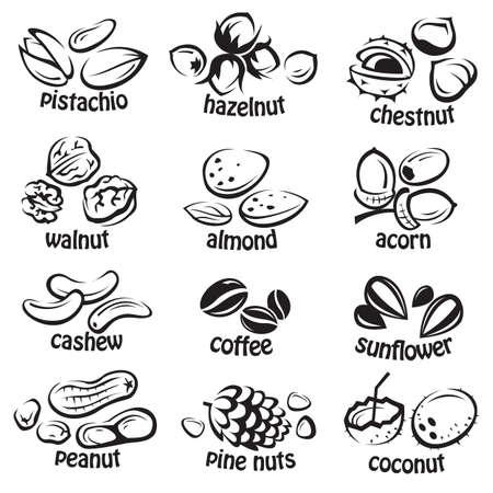 set of various nuts 일러스트