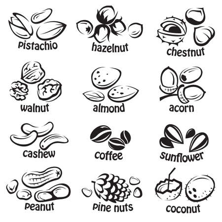 hazelnuts: set of various nuts Illustration