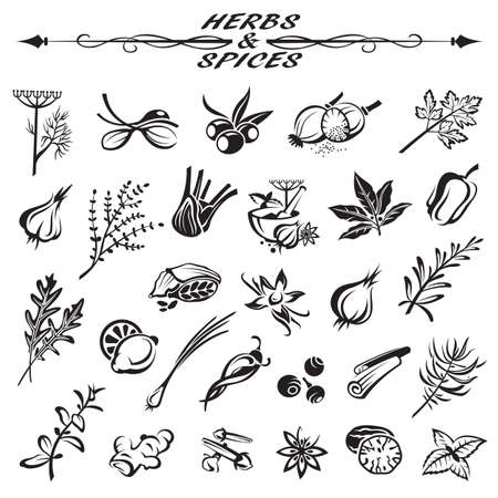 nutmeg: set of different herbs and spices Illustration