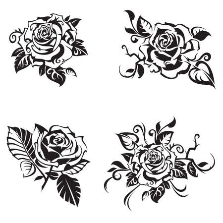 black rose set on white background Illustration