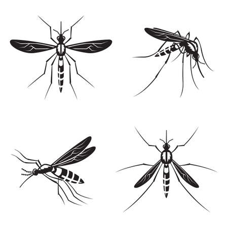suck blood: monochrome collection of four mosquito with stinger