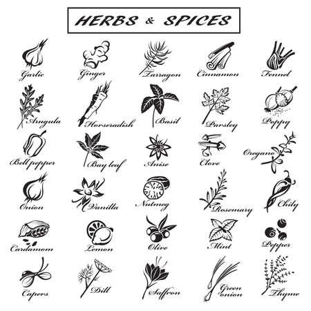 cilantro: conjunto de diferentes hierbas y especias