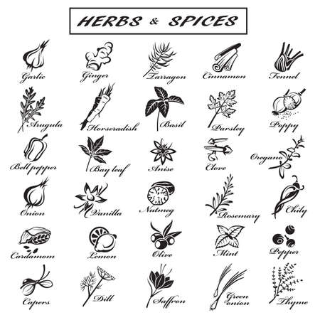 seeds: set of different herbs and spices Illustration