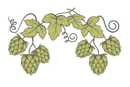 Illustration von Hopfen für das Brauen Standard-Bild - 70833114