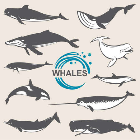 minke: Collection of various whales species images