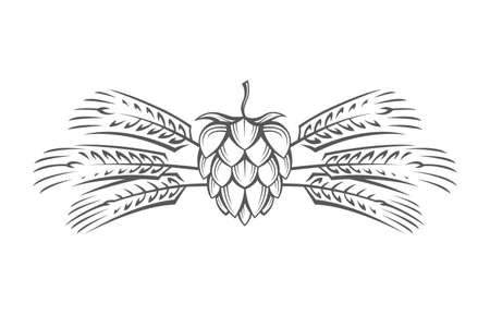 hop plant: Black illustration of hop and barley ear for brewing.