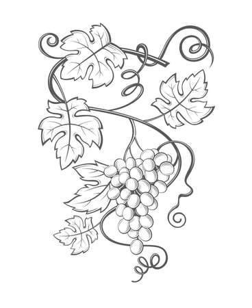 logo: Image of grapes with bunches and leaves