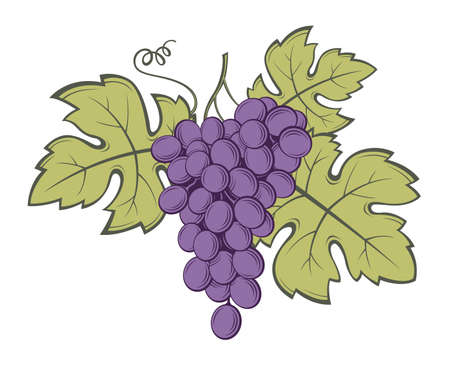 image: Image of grapes with bunches and leaves