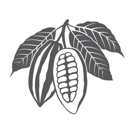 Monochrome cocoa beans and leaves illustration 矢量图像