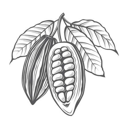 coffee beans: Monochrome cocoa beans and leaves illustration Illustration