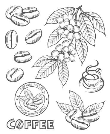 cup: Collection of coffee branch, beans and cup Illustration