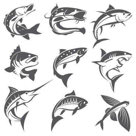 Raccolta di diversi tipi di pesci